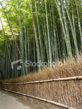 Kyoto bamboo forest on Shutterstock.com
